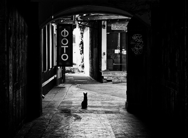 Life in passage or black cat on my way