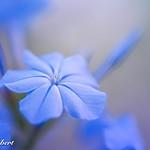 Blue Autumn Light