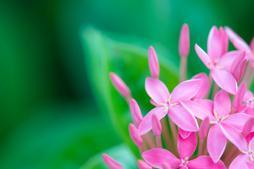 Tiny flowers | by Takashi(aes256)