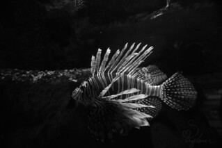 In the Depths | by Sarah Brigham