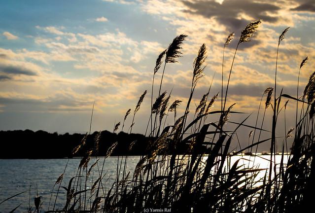 Sun gold over the  lake