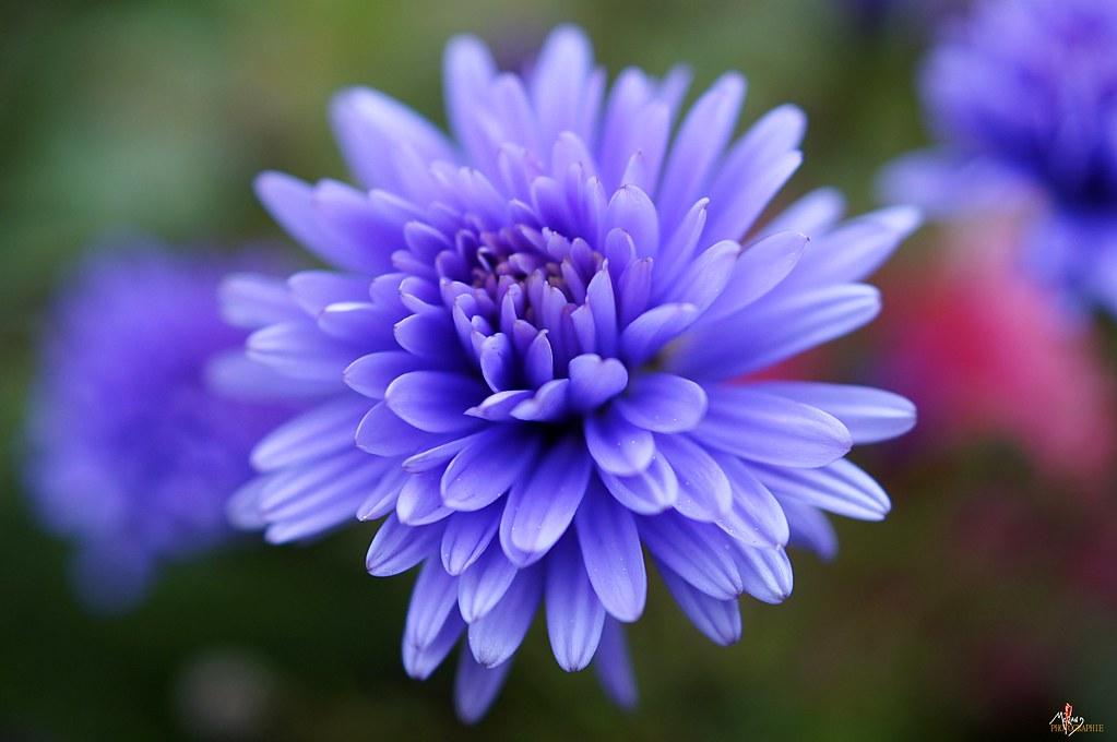 fleur du jardin d\'automne | découvrez mon univers graphique … | Flickr