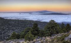 Parc national Cofre de Perote