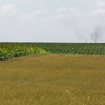 Fields of Hawkesville