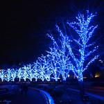 Tokyo Christmas VII