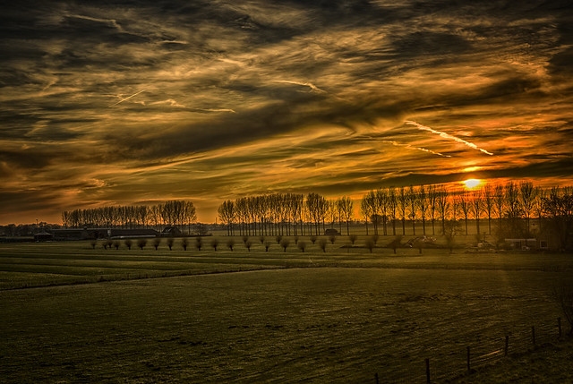 Culemborg, golden hour on the meadows.