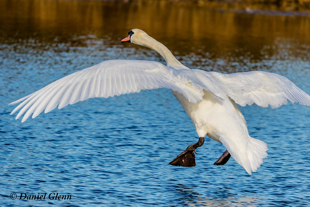 Mute Swan, you're cleared for landing on runway 3L
