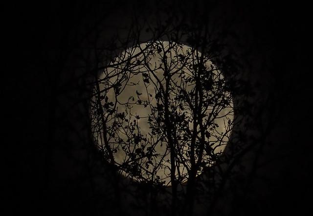 moon above Leoben/Austria