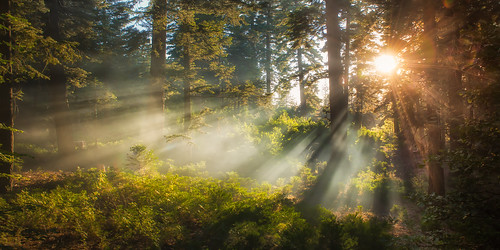 morning camping mountain fern tree nature pine forest dawn twilight nikon floor pacific smoke summit rays dogwood goldenhour crepuscular sanbernardino treadlightly angellight jameshale jimhale shutterjack
