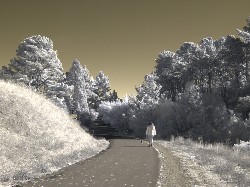 H20151103-0015—Walker and Dog along Nimitz Way—Tilden Regional Park