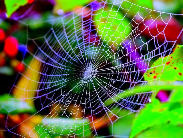 Bling Bling Spider Web