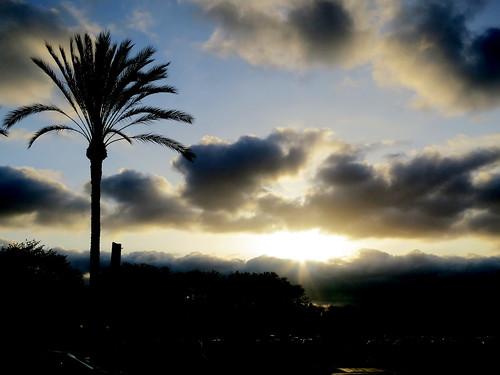 california sunset usa parkinglot palmtree placentia