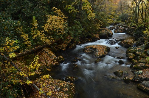 autumn fall leaves creek river fallcolor cascade tallulahriver northgeorgiamountains chattahoocheenationalforest rabuncountyga tatecityga colemanriverscenicarea