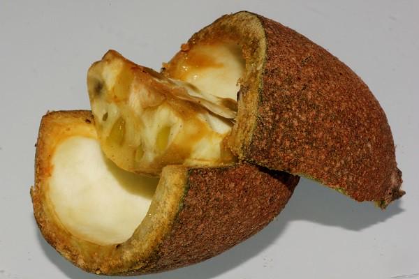 Atractocarpus sessilis