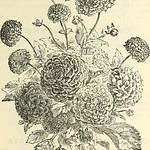 "Image from page 106 of ""Dreer's garden calendar for 1887"" (1887)"