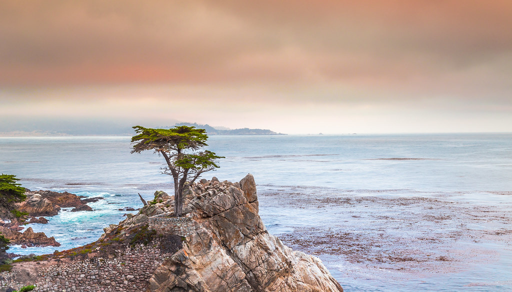 Pebble Beach - Carmel by the Sea - some old Tree