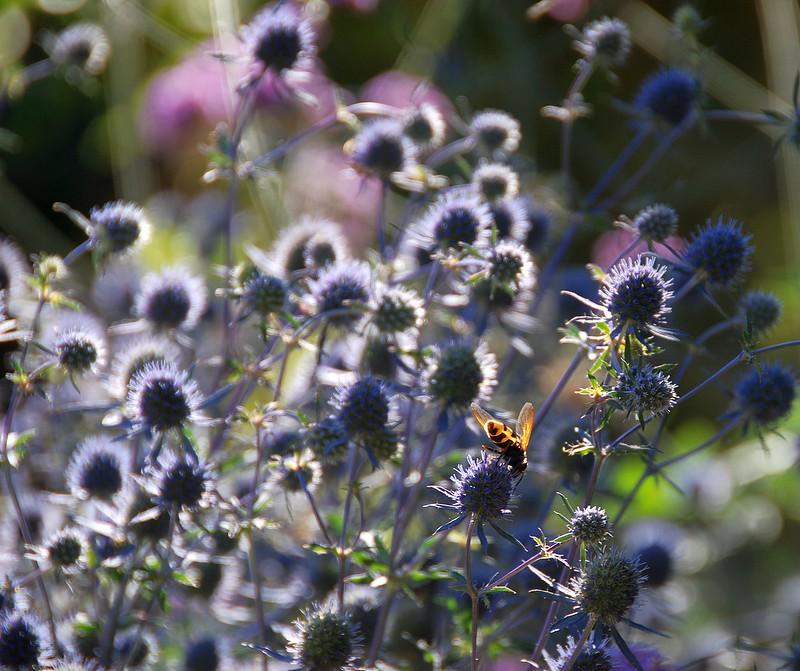 A Must-Sea Glimpse Into a Bee-autiful World!