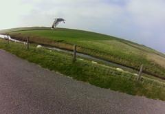 Texel seagull