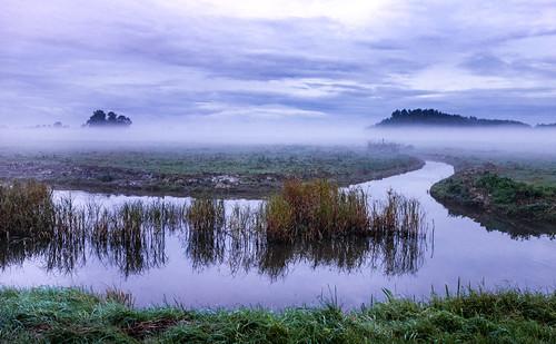 trees mist water grass fog clouds landscape canal canals polder vlaardingen groundfog otherkeywords nederlandvandaag
