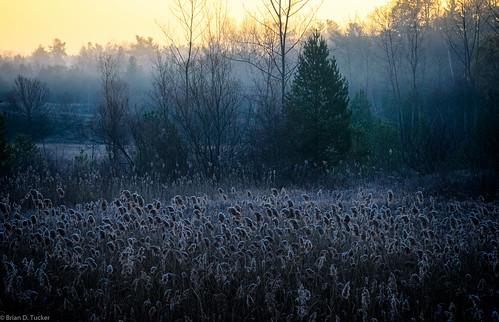 morning november autumn ontario fall reed fog forest sunrise reeds dawn morninglight foggy greenwood hike plantlife foggymorning 2015 d610 invasiveplant greenwoodconservationarea november2015 europeancommonreed briandtucker