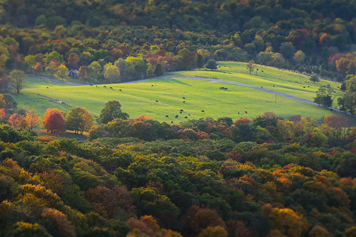 appalachia autumn barn cattle color colorful country cow dappled day distant fall farm field forest germanyvalley grass green hills landscape light mountains nature northforkmountain outdoors overlook rectangle scenery scenic sunlight sunset trees westvirginia riverton unitedstates us