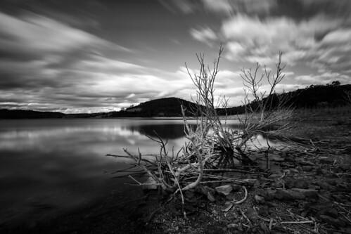 longexposure trees blackandwhite lake water monochrome au australia melbourne victoria filter christmashills