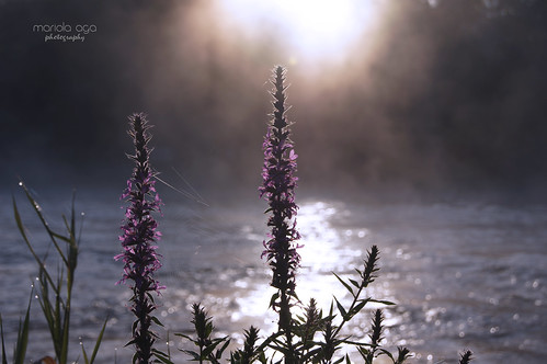 morning mist plant flower water sunrise river dof bokeh web spiderweb thegalaxy