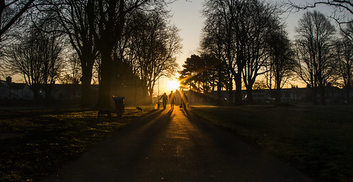 park morning light shadow dog sun mist tree dogs grass silhouette wales sunrise canon eos dawn outdoor path cardiff 5d walkers llandaff butepark pontcanna llandafffields stevegarrington