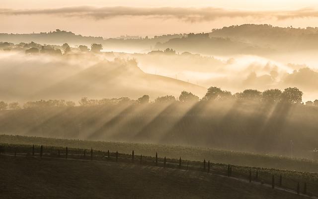 Misty dawn (12079)
