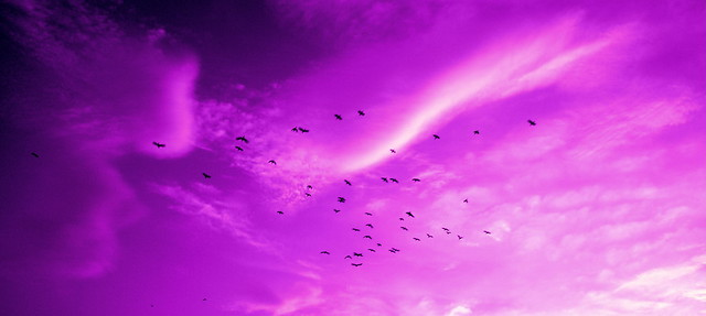 Purple sky and birds.
