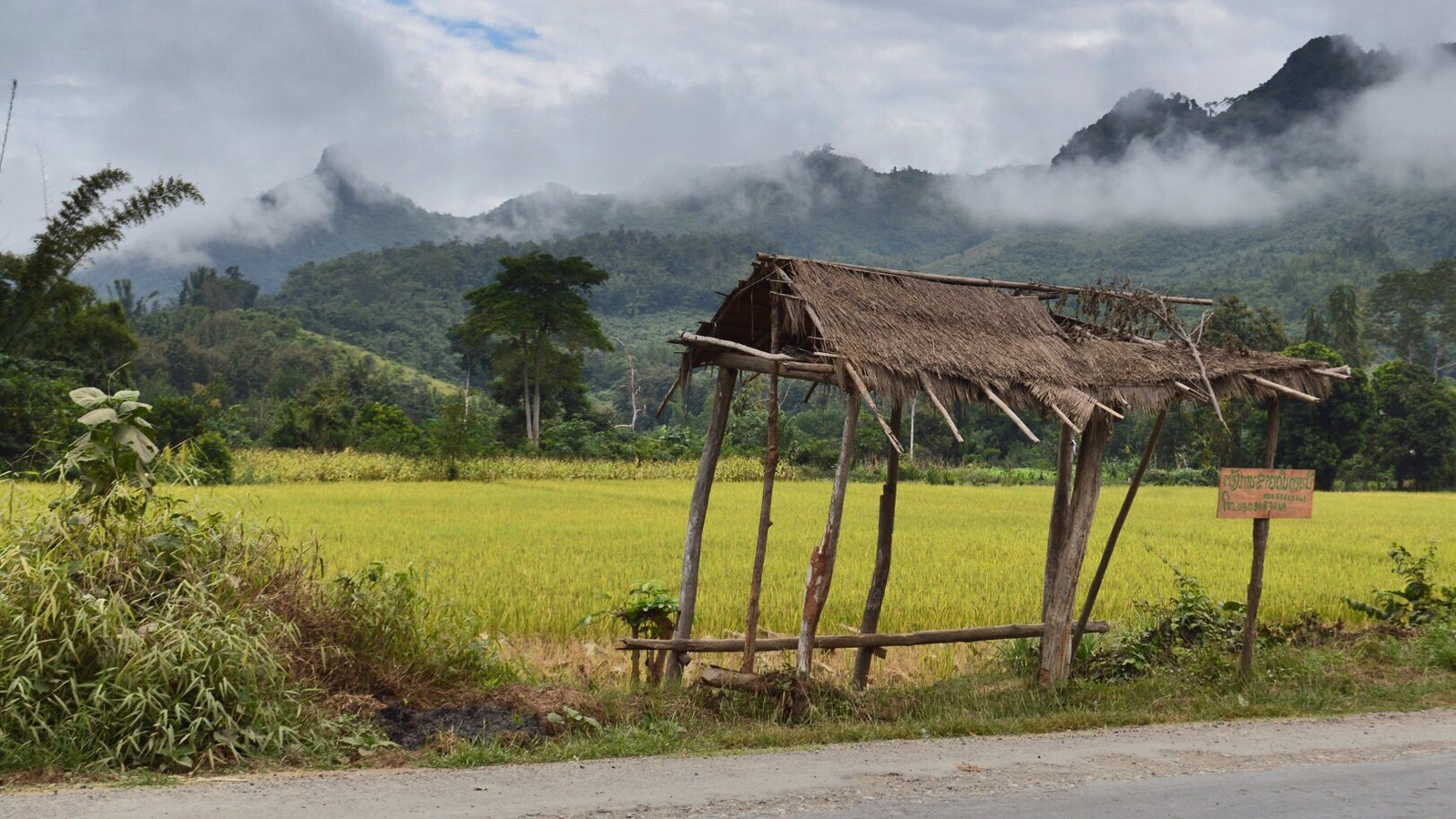 Laos rice fields with mountain scenery