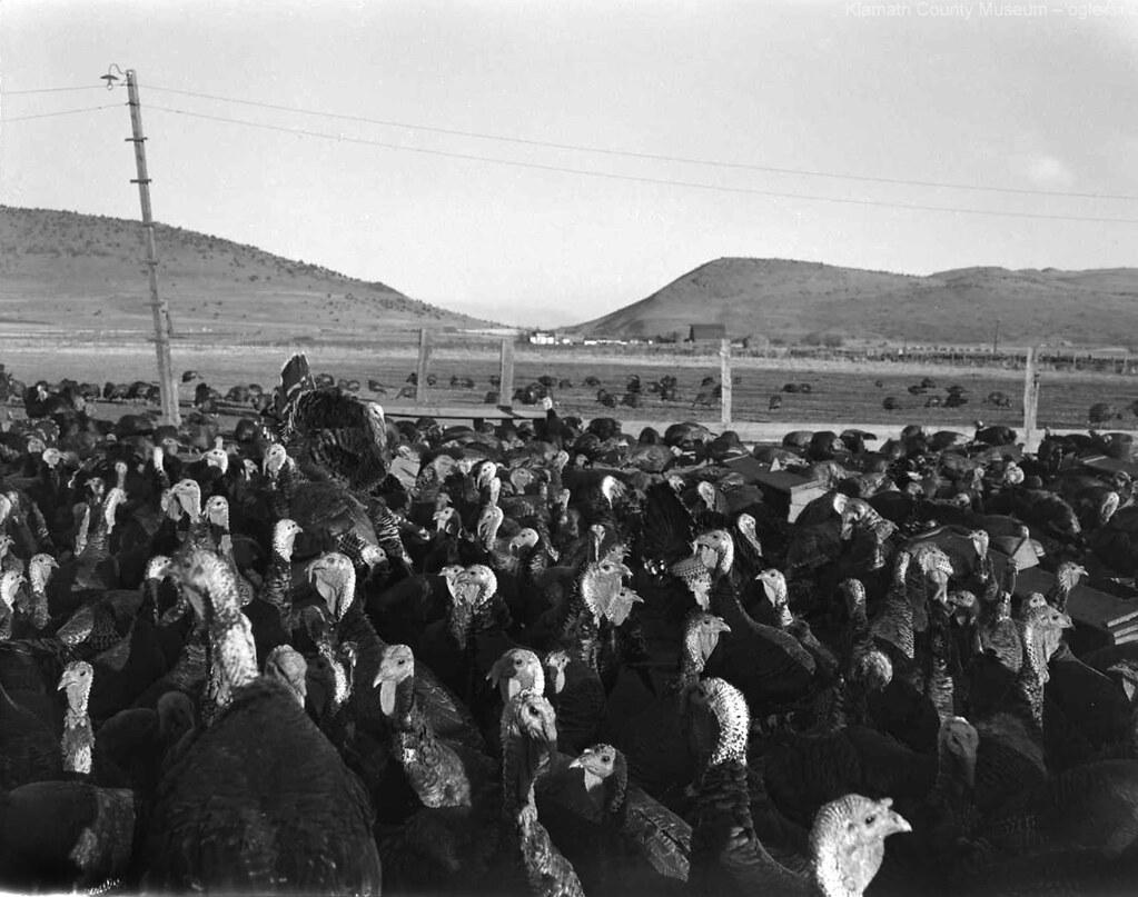 Photo of the Week – Nov. 22, 2015 – Turkey farm