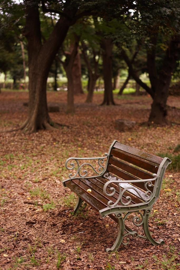 林の中の椅子