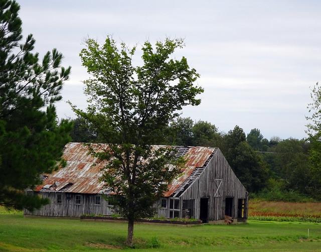 Windblown Barn