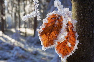 couple covered by frost | by .martinjakab