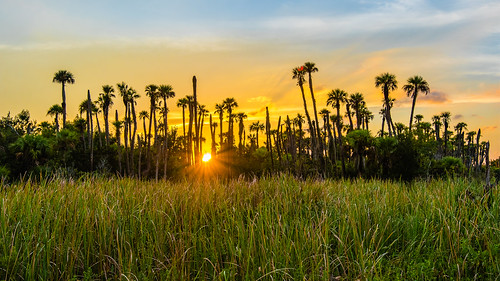orlandowetlandspark sunset florida mhazephoto