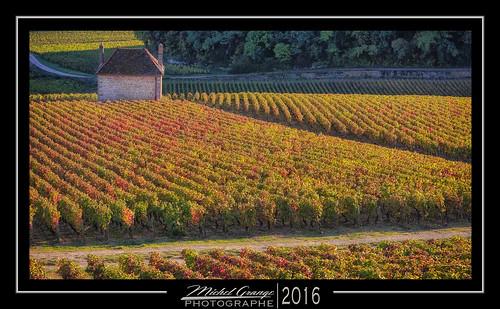 vignes wine burgundy bourgogne gevrey chambertin or côte orange jaune vendanges paysage landscape sunset soleil