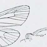 "Image from page 245 of ""Catalogue of Lepidoptera Phalaenae in the British Museum"" (1913)"
