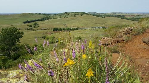 wildflowers sunnyday flinthills scenicview coronadoheights