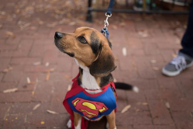 Shirlington Dog Treat or Treat-1.jpg