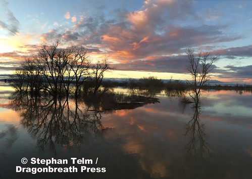 yolocauseway yolobypass yolocounty neardavis nearwestsacramento farmland wetlands floodcontrol beauty beautiful 365in2017 12365 12jan2017 pictureoftheday 2017yip sunset colors pano panorama iphone reflection symmetry trees bikecommute project365