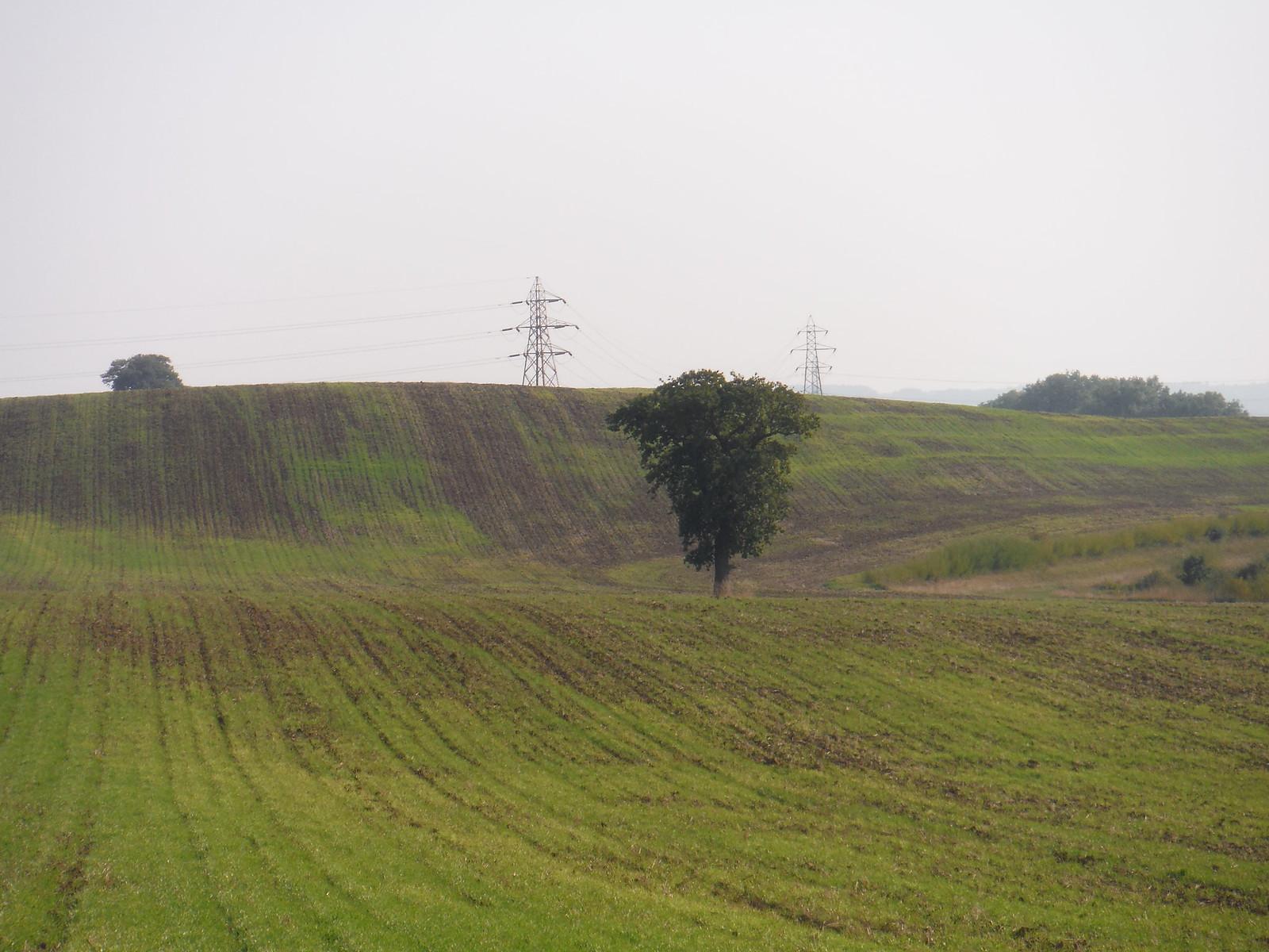 Fieldscape (IV) SWC Walk 159 South Woodham Ferrers to North Fambridge