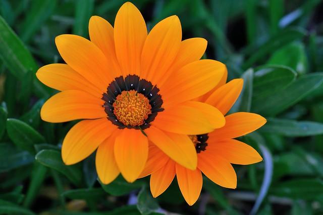 Orange Nature