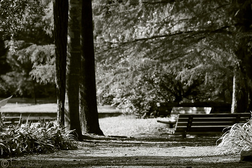monochrome garden landscape arboretum mercer botanic serene janbuchholtz