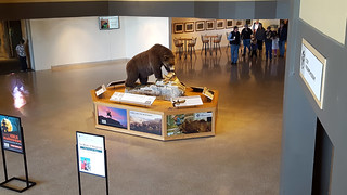 Grizzly bear taxidermy centerpiece