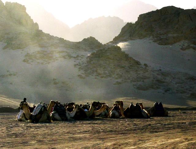 nel deserto del Sinai, Egitto