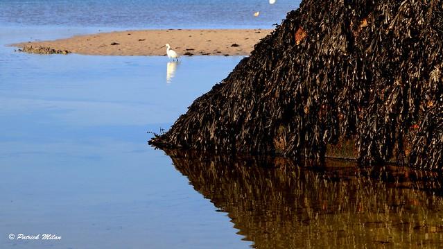 Seaweed reflection