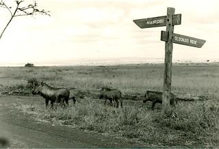 Aber (1965)