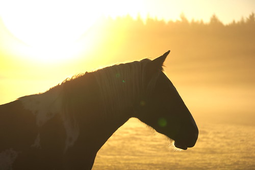 Horse silhouette | by nudelbach