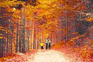 Forest | by hernanpba